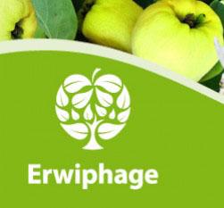 Erwiphage